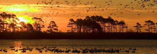 Fugle på sø